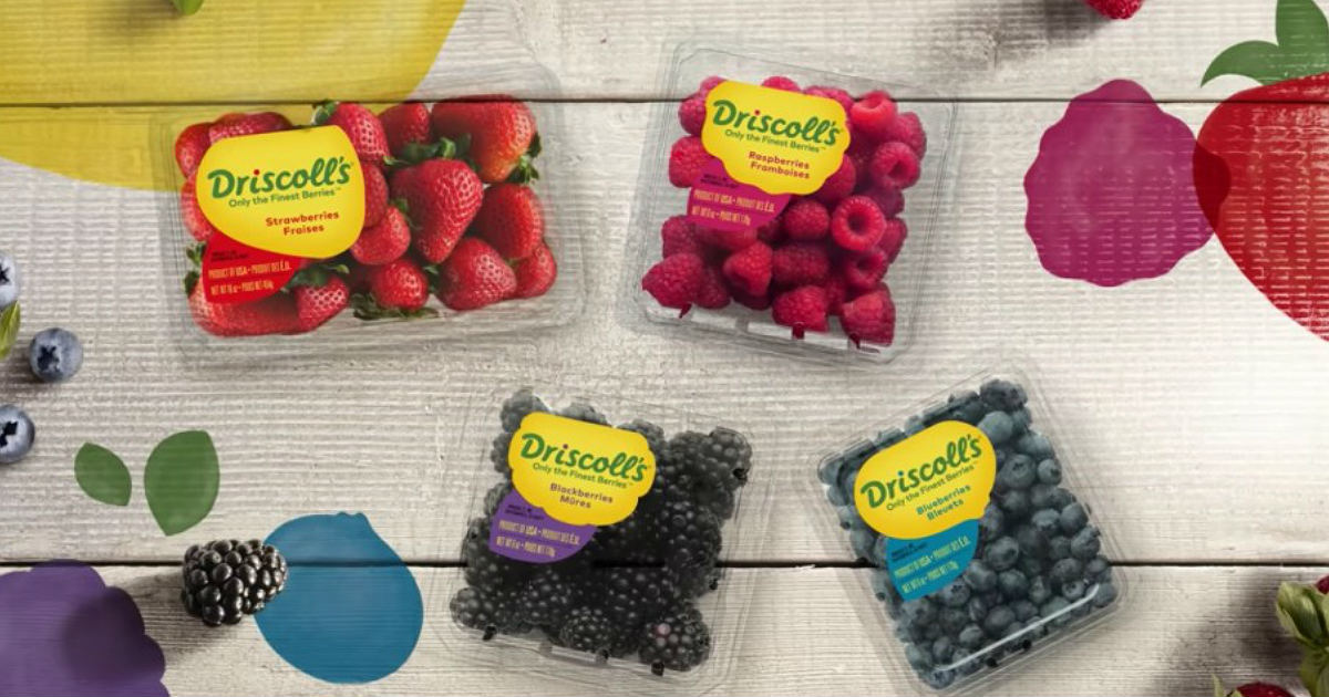 Win a $260 Visa Gift Card from Driscoll's